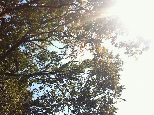 裏山の木も…(o^o^o)_c0140599_11421282.jpg