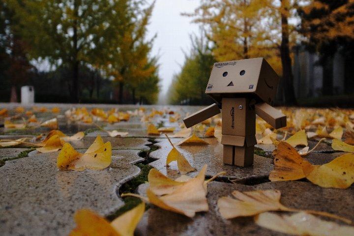 雨あがりのイチョウ並木_a0268412_22535648.jpg
