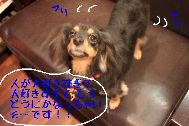 こんばんわぁ~~!!_b0130018_23532094.jpg