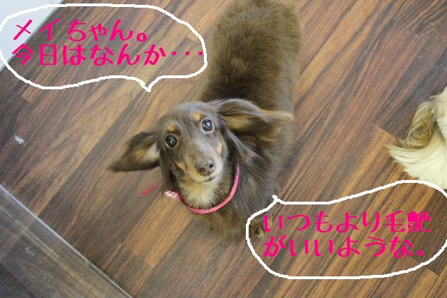 こんばんわぁ~~!!_b0130018_23553393.jpg