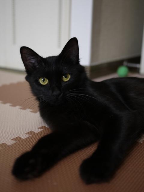猫のお友だち クロちゃん編。_a0143140_1635527.jpg