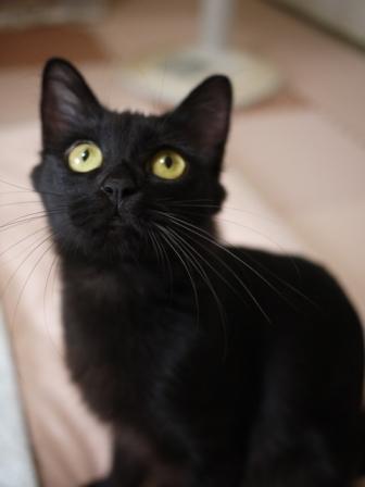 猫のお友だち クロちゃん編。_a0143140_16365766.jpg