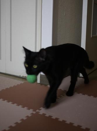猫のお友だち クロちゃん編。_a0143140_1638153.jpg