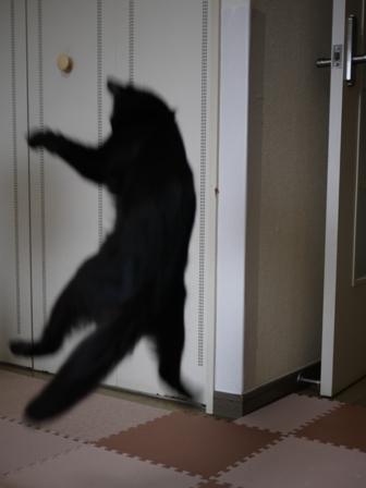 猫のお友だち クロちゃん編。_a0143140_1638537.jpg