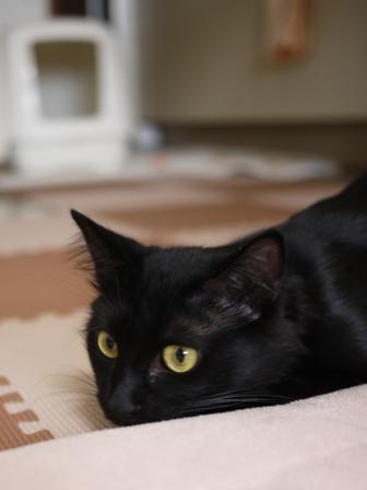 猫のお友だち クロちゃん編。_a0143140_16394156.jpg