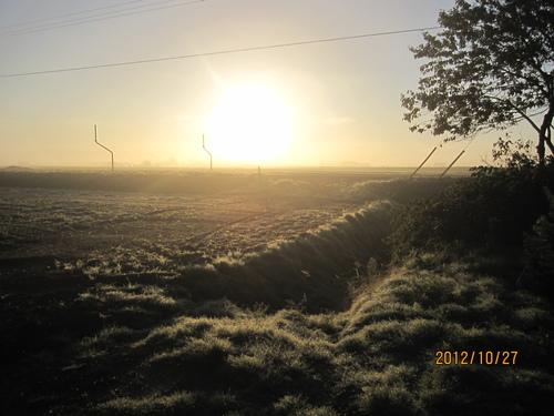 寒い朝_f0231042_114534.jpg
