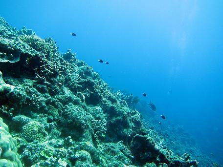 ケラマで体験ダイビング☆_a0156273_1963092.jpg