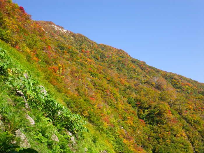 紅葉の朝日連峰祝瓶山コカクナラ沢 ~ 2012年10月22日_f0170180_2533285.jpg