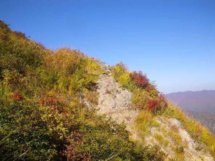 紅葉の朝日連峰祝瓶山コカクナラ沢 ~ 2012年10月22日_f0170180_4125562.jpg