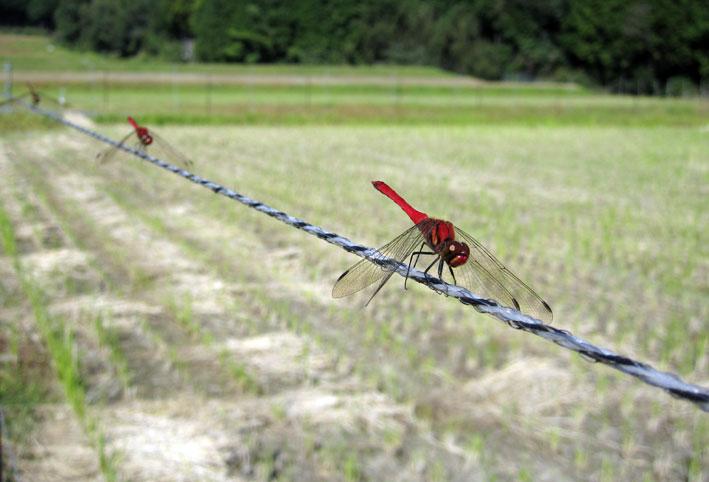 榊原にもあった赤いの二つ_b0145296_1916525.jpg