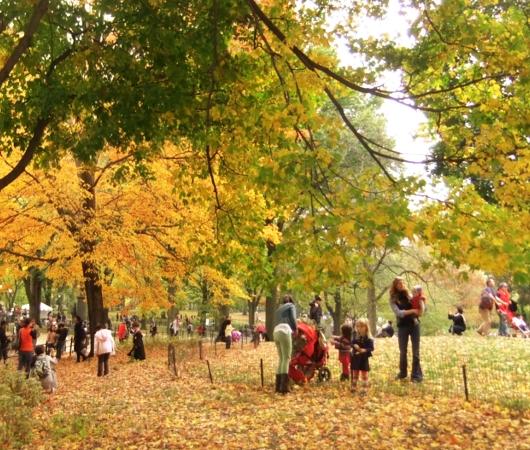 NYのセントラルパークの落ち葉のじゅうたん_b0007805_1321092.jpg
