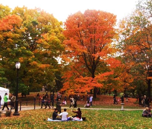 NYのセントラルパークの落ち葉のじゅうたん_b0007805_1324913.jpg
