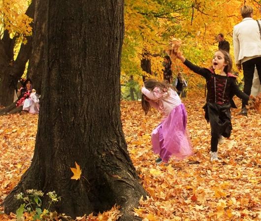 NYのセントラルパークの落ち葉のじゅうたん_b0007805_1331694.jpg