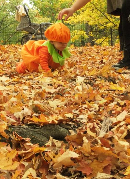 NYのセントラルパークの落ち葉のじゅうたん_b0007805_1334775.jpg
