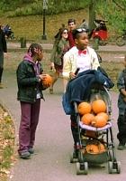 NYのセントラルパークの落ち葉のじゅうたん_b0007805_13375740.jpg