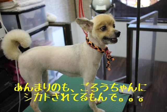 こんばんわぁ~~!!_b0130018_003788.jpg