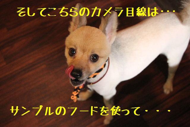 こんばんわぁ~~!!_b0130018_004883.jpg