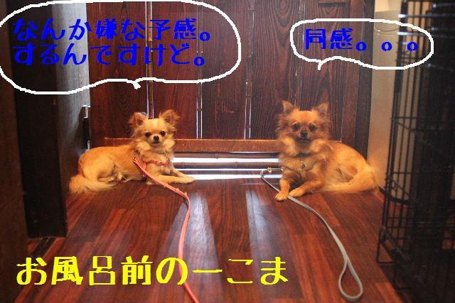 こんばんわぁ~~!!_b0130018_014658.jpg