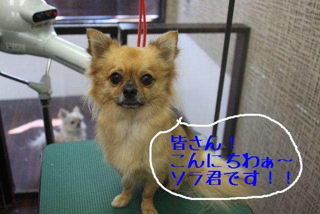 こんばんわぁ~~!!_b0130018_022951.jpg