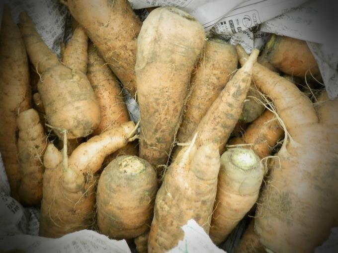 「自然農な お野菜」の販売始めました♪_a0125419_15451194.jpg