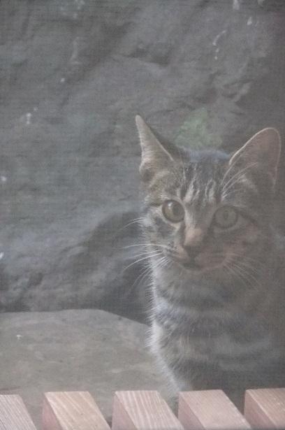外猫事情_f0085219_20363386.jpg