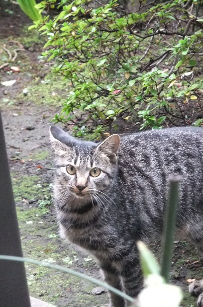 外猫事情_f0085219_20381842.jpg