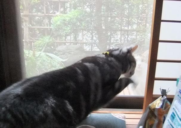 外猫事情_f0085219_21342752.jpg