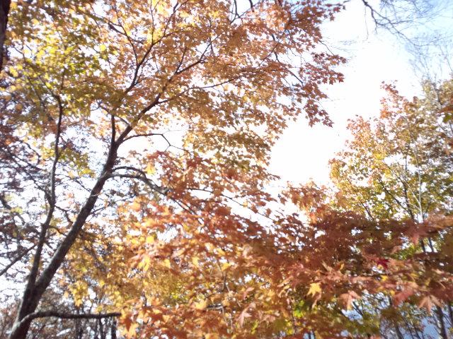 【 家族 de 登山 】 2012 ・ 10/27_f0101226_6503311.jpg