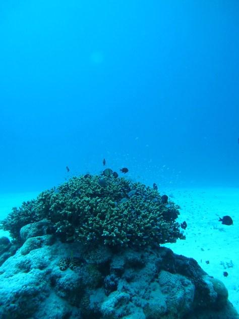 10月28日久しぶり、この天気と海でケラマダイビング_c0070933_22472295.jpg