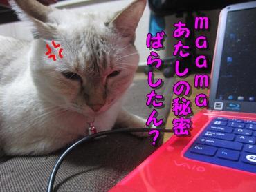 b0151748_1803176.jpg