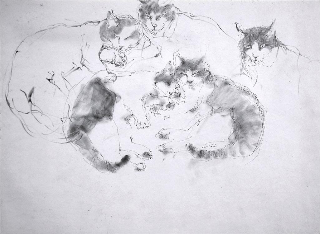 《 クロッキー ・・・ 猫 2 》_f0159856_5295815.jpg