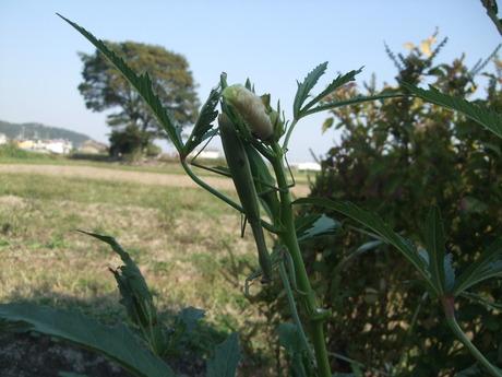我が家の畑 番外編3 畑のいきものたち_d0191262_18321279.jpg