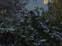 Der erste Schnee_e0116763_2015015.jpg