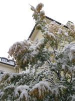 Der erste Schnee_e0116763_2041575.jpg