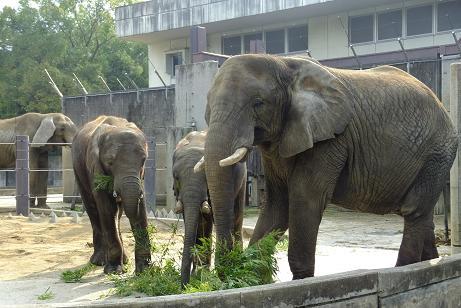 動物園の日_e0272869_21275554.jpg