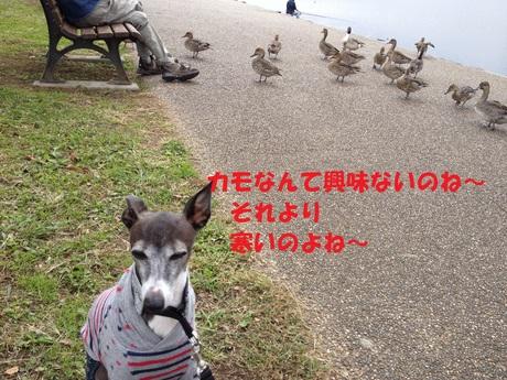 f0223972_2043616.jpg