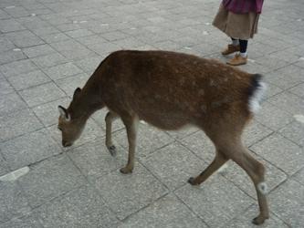 初めての広島。_e0188087_11413949.jpg