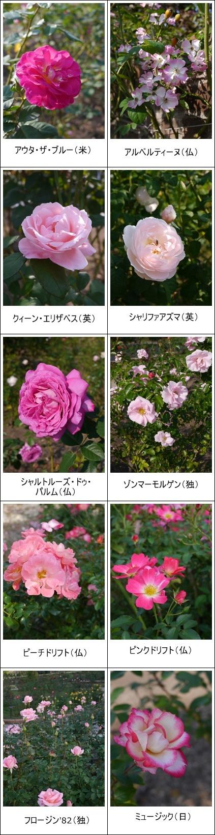 花フェスタ記念公園(秋)①_b0142989_19231532.jpg