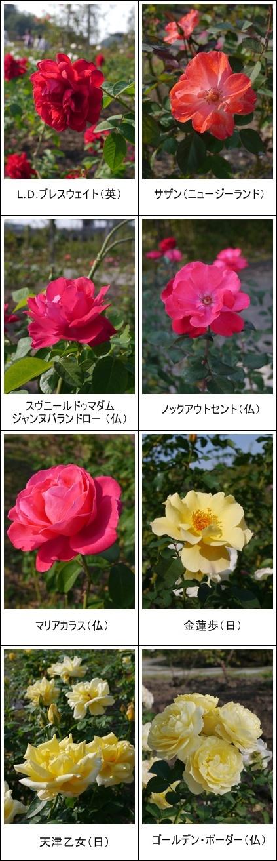 花フェスタ記念公園(秋)①_b0142989_1923232.jpg