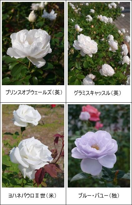 花フェスタ記念公園(秋)①_b0142989_19232478.jpg