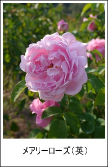 花フェスタ記念公園(秋)①_b0142989_1929740.jpg