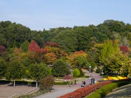 花フェスタ記念公園(秋)③_b0142989_20231825.jpg