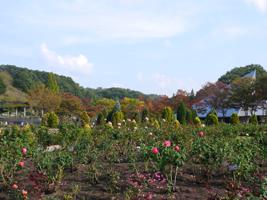 花フェスタ記念公園(秋)③_b0142989_2023528.jpg