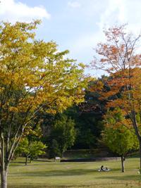 花フェスタ記念公園(秋)③_b0142989_20322782.jpg
