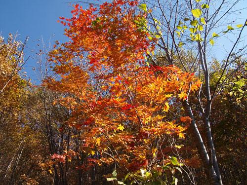 神様の秋祭り_f0236291_1045364.jpg