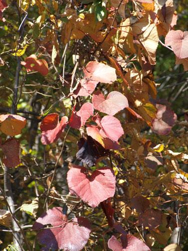 神様の秋祭り_f0236291_10455373.jpg