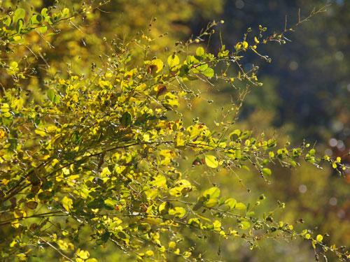 神様の秋祭り_f0236291_10462620.jpg