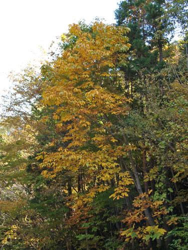 神様の秋祭り_f0236291_10471157.jpg