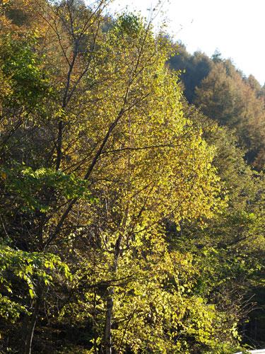 神様の秋祭り_f0236291_104815.jpg
