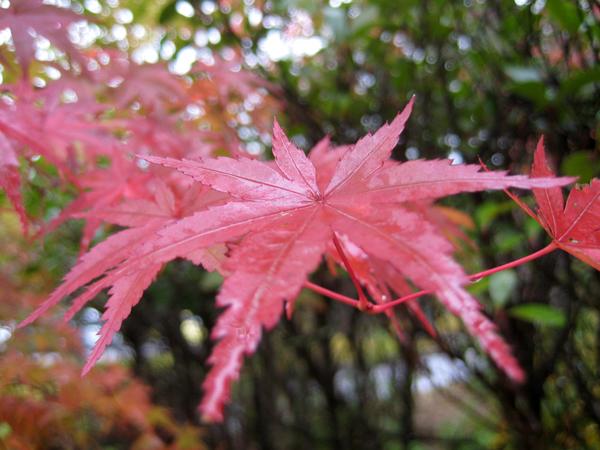 秋の信楽へ・「土偶・コスモス展」_a0030594_21282474.jpg